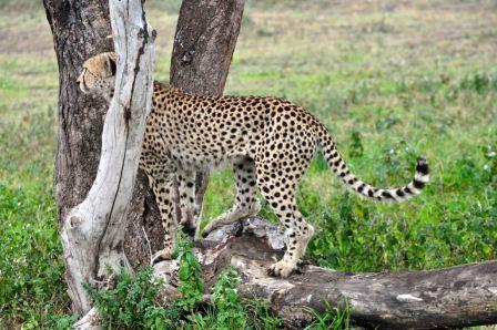 Tanzania Trip Report
